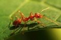 نهشها النمل وهي على قيد الحياة!