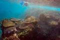 اكتشاف منطقة غامضة بالبحر الكاريبي تحوي أسماكًا غير معروفة