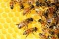 ماذا لو اختفى النحل؟ سيناريو مخيف للبشرية