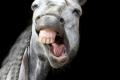 لماذا تعتبر الخيول أخطر الحيوانات في أستراليا؟