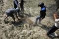 بالصور.. نمر بري يصيب 15 بينهم 3 من الشرطة في نيبال