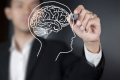 معلومات غريبة عن العقل البشري