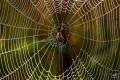 اكتشاف مذهل وغريب من سم عنكبوت صيني شديد العدوانية