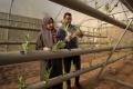 """""""الزراعة المائية"""" و""""استخلاص الزيوت الطبية"""".. مبادرات تتحدى الحصار في غزة"""