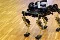 شبل الفهد: روبوت يمشي ويركض كالفهد الصغير!
