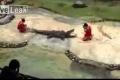 بالفيديو .. تمساح يقبض على رأس مغامر تايلاندي