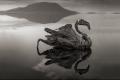 البحيرة التي تحول الحيوانات إلى صخور