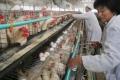 """تحذير من تحول """"إنفلونزا صينية"""" لوباء عالمي"""