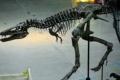 اكتشاف ديناصور عمره 120 مليون سنة باليابان