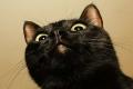 لماذ يتشاءم الناس من الرقم 13 والقطة السوداء؟