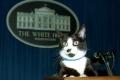 لهذا السبب قررت واشنطن إجراء إحصاء لعدد القطط