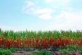 الجفاف الأسوأ منذ 60 عاماً يحكم قبضته على «سلة غلال» الولايات المتحدة