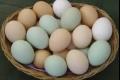 للوقاية من السكري: تناول البيض 4 مرات أسبوعياً