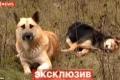 لنا في الكلاب درس... كلب يحرس جثة رفيقته لمدة أسبوع - شاهد الفيديو