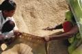 الفاو تحذر من نقص حاد في إمدادات القمح عالميا