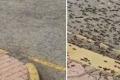 بالفيديو... النمل الأسود الكبير ينتشر بالمليارات في سلطنة عُمان