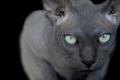 الجانب الآخر الجميل والهش للقطط الفرعونية