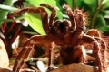 بالفيديو.. عنكبوت يلتهم فأرًا