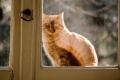 قطتك لا تحبك غالباً ...ماذا تقول الأبحاث العلمية عن القطط؟
