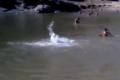 شاهد .. ثعبان عملاق وراء غرق الزوجين اليمنيين في مياه سد