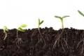 كيف تنمو النباتات باتجاه معاكس للجاذبية الأرضية؟