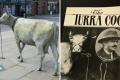 هل تعرف (تورا كو)؟ البقرة التي قادت مدينة بأكملها إلى أعمال شغب