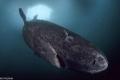 غرائب الكائنات: قرش بلغ 500 عام وميكروب يعيش منذ 10 آلاف سنة