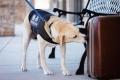 لماذا تتفوق الكلاب على التقنيات الأخرى في كشف المتفجرات؟