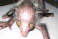 هل تعرف من هو الحيوان الشيطاني؟؟