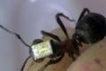 """""""النمل"""" يطور فيس بوك وتويتر بأجهزة استقبال لاسلكية"""