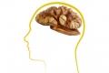الطعام الذي يزيدنا ذكاءً