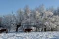 عشر وفيّات خلال يومين بسبب البرد في بولندا