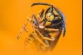 هل سبق لك أن تمنّيت الهلاك الكاسح للحشرات حولنا؟؟ إذا أنظر لما سيحدث إن ...