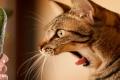 لهذه الأسباب تخاف القطط من الخيار أكثر من الكلاب!