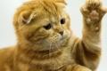 الكشف عن سبب حب القطط للصناديق