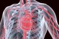 ما لا تعرفه عن القثطرة القلبية