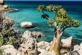 جزيرة سقطرى.. موطن اللبان والجنطيانا وشجرة دم العنقاء