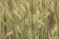 «الفاو» تحذر من أزمة غذاء عالمية إذا استمر ارتفاع الأسعار