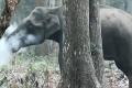 ما حقيقة أمر هذا الفيل المُدَخِّن؟