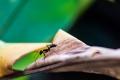 من بينهم «النملة الرصاصة» و«النحل الأفريقي».. بعض أخطر حشرات في العالم يجب تُميزها وتبتعد عنها ...