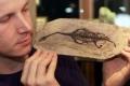 اكتشاف البيبي ديناصور في جنوب انجلترا