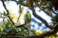 الطيور ترى لونا لا يراه البشر