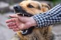 ما الذي سيحصل لك إن عضك كلب و لم تأخذ الدواء؟