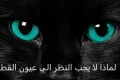 هل تعلم لماذا لا يجب علينا ان ننظر في أعين القطط مباشرة؟