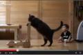 شاهد الفيديو ..قط يعلم طفلاً المشي!