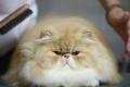 إيران تدرس إرسال قطة إلى الفضاء
