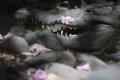 10 أمثال متداولة عن الحيوانات تخالف الواقع.. تعرف عليها