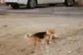 الميت قط والدافن كلب.. فيديو يعلم معنى الرحمة