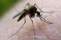 فيروس غرب النيل يقتل ويصيب المئات في ولاية تكساس