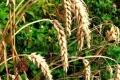 علاج الكولسترول بالنباتات
